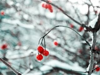 7 Marketing and Customer Experience Tips for a Different Holiday Season