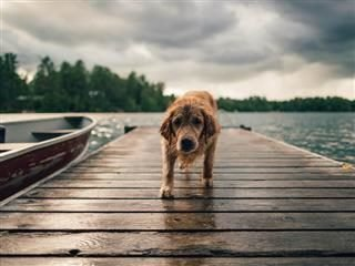 Loyalty Without Trust: A Long Walk Off a Short Pier